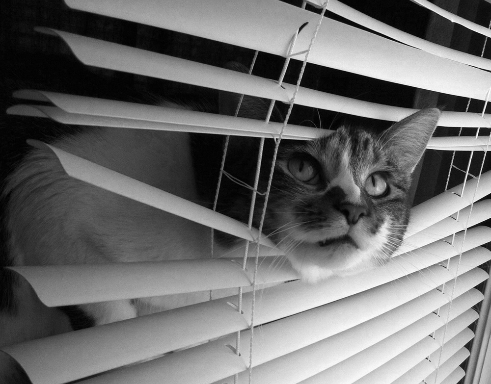 Bea in blinds